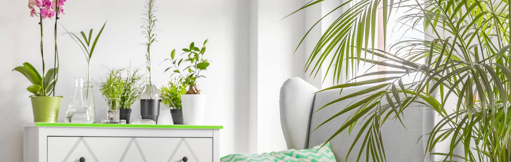 pflanzenvermietung elsterwerda pflanzen vermieten pflanzen f r winter blumen f r sommer. Black Bedroom Furniture Sets. Home Design Ideas