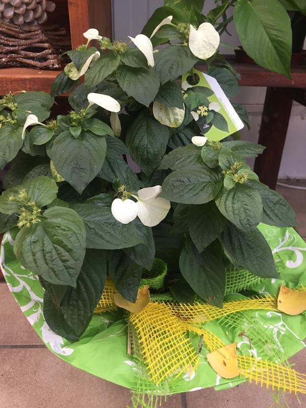 pflanzen zimmerpflanzen gr npflanzen und bl hpflanzen in. Black Bedroom Furniture Sets. Home Design Ideas